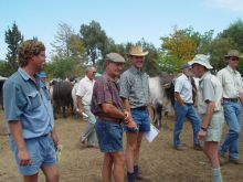 Aim Cattle Farmers In South Africa